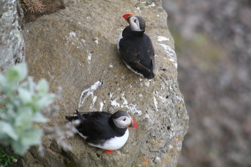 Best-of-North-Iceland - Birdcliffs-Tjornes-naer-Husavik-1.jpg