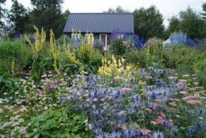 Best-of-North-Iceland - Botanical-Garden-Akureyri-1.jpg