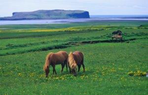 Best-of-North-Iceland - Skagafjördur.jpg
