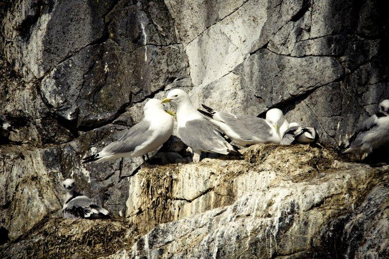 Spectacular-Iceland - Bird-watching-cruise-Breiðarfjörður.jpg