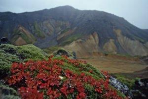 Spectacular-Iceland - Iceland-Landmannalaugar.jpg