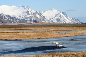 GJ-21-northen-lights-exploration - GJ-21-Vatnajökull-National-Park-Swans-at-the-glacier-Frederikke-PCs-conflicted-copy-2016-05-17.jpg
