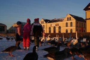 GJ-24-Christmas-and-northern-lights-adventure - GJ-24-Christmas-Reykjavik-city-pond.jpg