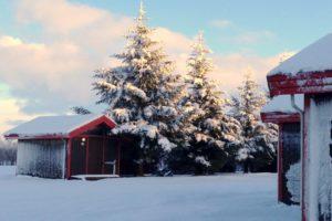 GJ-24-Land-of-northen-lights - GJ-24-Arhus-Cottages-in-Hella-South-Iceland-18.jpg