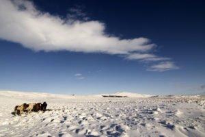 GJ-24-Land-of-northen-lights - GJ-24-Icelandic-winter.jpg