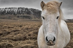 GJ-26-northern-lights-in-style - GJ-26-Iceland-horse.jpg