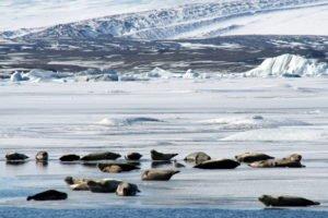 GJ-27-AURORAS-GLACIAL-LAGOON - GJ-27-Glacier-lagoon-with-seals-5.jpg