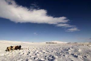GJ-27-AURORAS-GLACIAL-LAGOON - GJ-27-Icelandic-Countryside-3.jpg