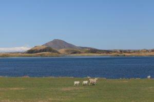 GJ-90-Iceland-country-life - GJ-90-Lake-Myvatn.jpg