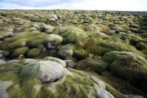GJ-90-Iceland-country-life - GJ-90-Lava-field-in-Iceland.jpg
