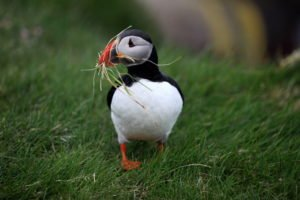 GJ-91-Express-iceland - GJ-91-A-selfie-picture-with-a-puffin.jpg