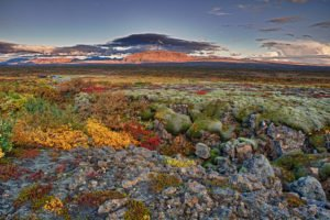 GJ-91-Express-iceland - GJ-91-Thingvellir-autumn-colours.jpg