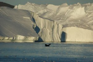 GJ-92-iceland-greenland-discovery - GJ-92-iceland-greenland-discovery-Midnight-sailing-at-the-Icefjord-16.jpg