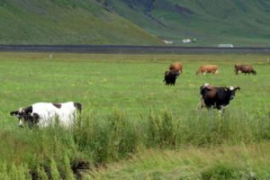 GJ-99-Grand-tour-of-Iceland - GJ-99-Þorvaldseyri-in-South-Iceland-17.jpg