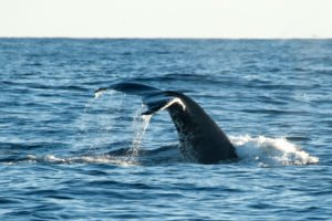 banners - GJ-Greenland-whale-banner.jpg