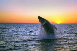 banners - GJ-Whale-watching-Húsavík-banner.jpg